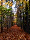 След леса и упаденные листья за университетом Мерилендаа стоковое изображение