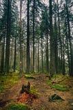 След леса с красным знаком туриста точки Стоковая Фотография