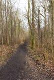 След леса Стоковое фото RF