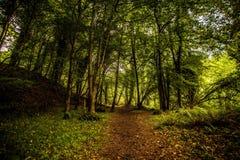 След леса Стоковое Фото