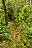 След джунглей, Коста-Рика Стоковые Изображения RF