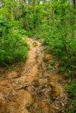 След джунглей Стоковые Изображения