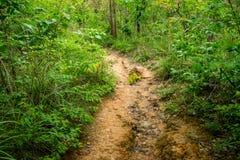 След джунглей Стоковое Изображение