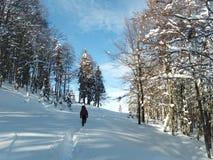 След зимы к горе стоковое фото