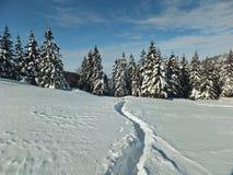 След зимы на снеге стоковое изображение rf