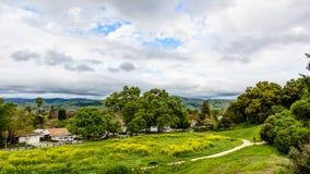 След и зеленые растения под облачным небом Стоковая Фотография