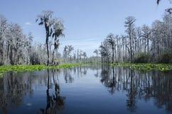 След каяка каное озера Minnies, охраняемая природная территория соотечественника болота Okefenokee Стоковая Фотография