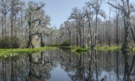 След каяка каное озера Minnies, охраняемая природная территория соотечественника болота Okefenokee Стоковые Фото
