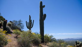 След между гигантским Saguaro на пике башенкы Стоковые Изображения RF