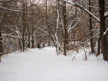 След между деревьями в зиме Стоковое Изображение