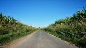 След между огромными кукурузными полями Стоковое Фото