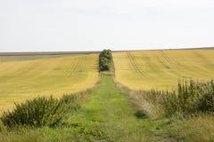 След между полями на южных спусках Сассекс Англия Стоковые Фотографии RF