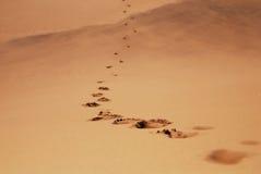 След ноги в пустыне стоковое изображение