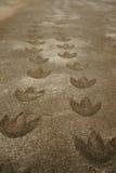 След ноги динозавра стоковая фотография rf