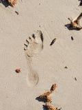 След ноги на пляже стоковые фотографии rf