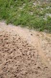 След ноги оленей Стоковые Фотографии RF