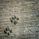 След ноги собаки на цементе Стоковое Фото