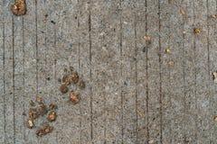 След ноги собаки на цементе Стоковая Фотография RF