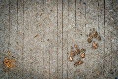 След ноги собаки на цементе Стоковая Фотография