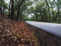 Следовать дорогой Стоковое фото RF