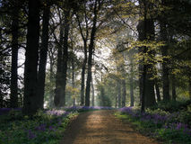 Следовать путем Bluebell Стоковые Фотографии RF