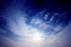 Следовать светом и гусыни летают на юг стоковая фотография rf
