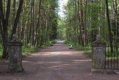 12 следов в парке Павловска Стоковая Фотография RF