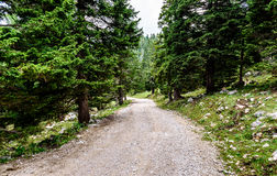 След дороги пути или горы Forrest водя к безграничности Стоковое Изображение RF