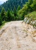 След дороги пути или горы Forrest с деревьями в предпосылке Стоковое Изображение RF