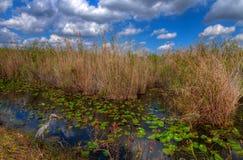 След Парк-американской змеешейки FL-болотистых низменностей национальный Стоковое Изображение RF