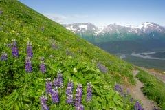 След поля льда Harding, Seward, Аляска Стоковое фото RF