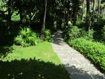 След прочь среди сочных деревьев Стоковое Фото