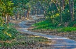 След сафари леса Стоковое Изображение RF
