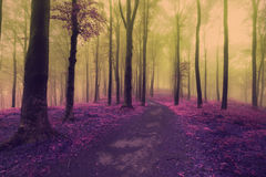 След сказки в туманный лес Стоковое Изображение RF