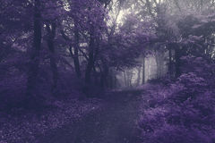 След сказки в туманный лес Стоковые Изображения