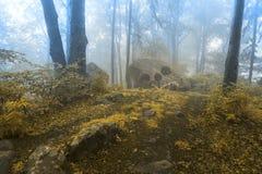След сказки в туманный лес Стоковая Фотография