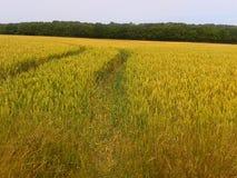 След трактора Стоковое Изображение RF