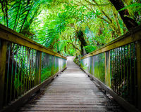 След тропического леса остатков Maits на большой дороге океана, Австралии Стоковые Фотографии RF