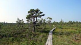 След трясины в национальном парке Soomaa в Эстонии стоковое фото rf