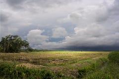 Следует жатки на полях рисовых полей Стоковая Фотография RF