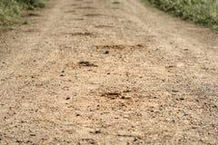 следуйте копыто лошади на песочной дороге в древесинах Стоковое Фото