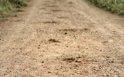 следуйте копыто лошади на песочной дороге в древесинах Стоковые Изображения