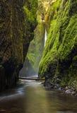 След ущелья Oneonta в ущелье Рекы Колумбия, Орегоне Стоковые Изображения