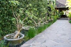 следуя за сад footpath расквартировывает длинний камень Стоковые Изображения
