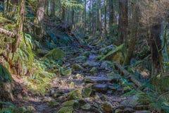 След через высокие деревья в падениях влажных Cypress леса паркует Британскую Колумбию Канаду Стоковые Изображения RF