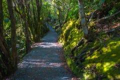 След через сочный зеленый национальный парк ледника Frantz Josef дождевого леса, Новую Зеландию Стоковые Изображения