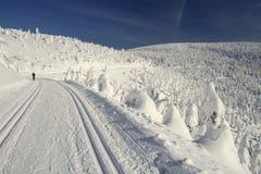 След лыжи по пересеченной местностей Стоковые Фото