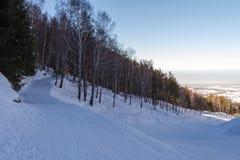 След лыжи через лес Стоковые Изображения