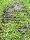 Следы автошины в вертикали травы Стоковые Фото