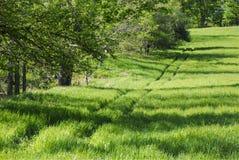 Следы автошины в поле Стоковые Изображения